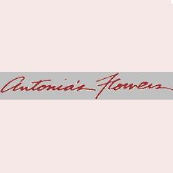 Antonia`s Flowers
